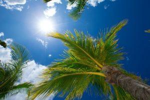 DFW Palm Trees